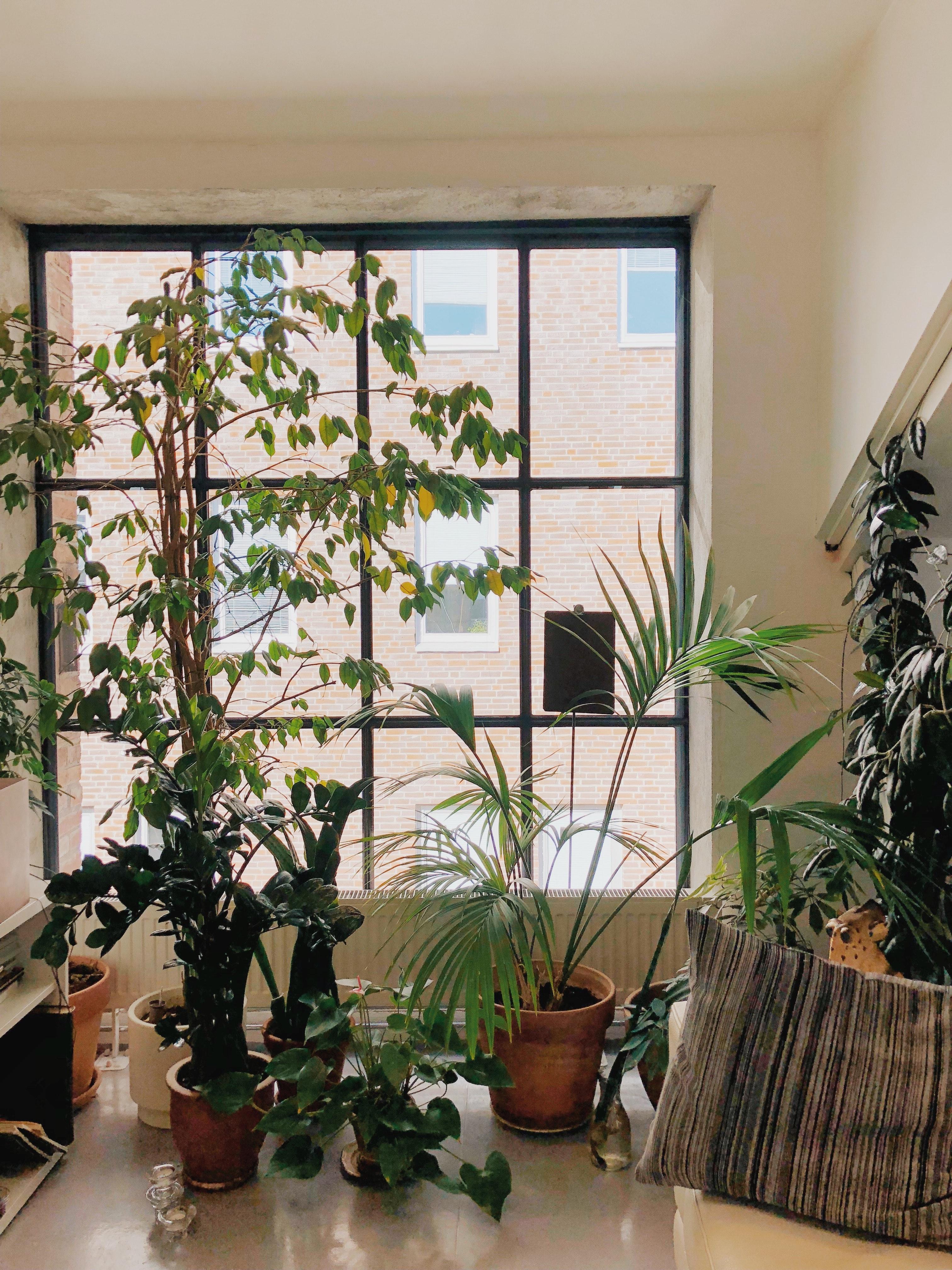 Duże okna – plusy minusy
